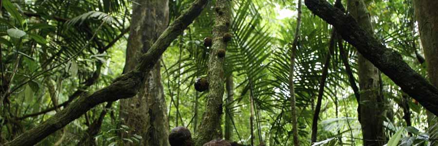 Malaysia Reiseidee Natur und Aktiv © Malaysia Tourism Promotion Board