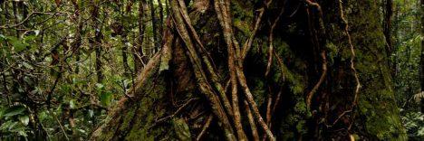 Malaysia Reiseziele Taman Negara © Malaysia Tourism Promotion Board